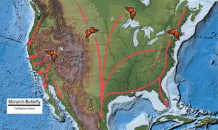 A handy map of monarchs' fall migration patterns, created by USGS National Atlas.