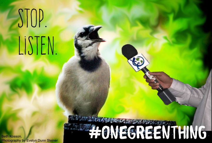 Kosson_OGT Stop Listen
