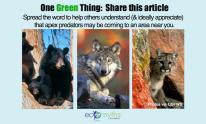 OneGreenThing-Apex-Predators